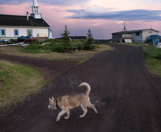 A dog walks near the Church of the Holy Family in Łutsël K'é, Northwest Territories. The church was built near the present day settlement in the 1930's and moved to its current location at the tip of the peninsula—one of the tallest and most recognizable structures in the community.